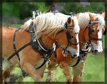 Workhorse Website